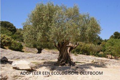 Oestercompagnie werkt met Ecologische olijfolie