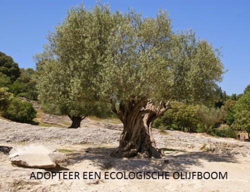 Adopteer een ecologische olijfboom van een eerlijke olijfolie boer