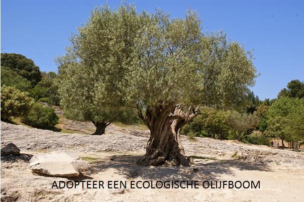 Ecologische Olijfboom