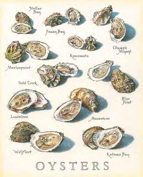 Prent met verschillende oesters